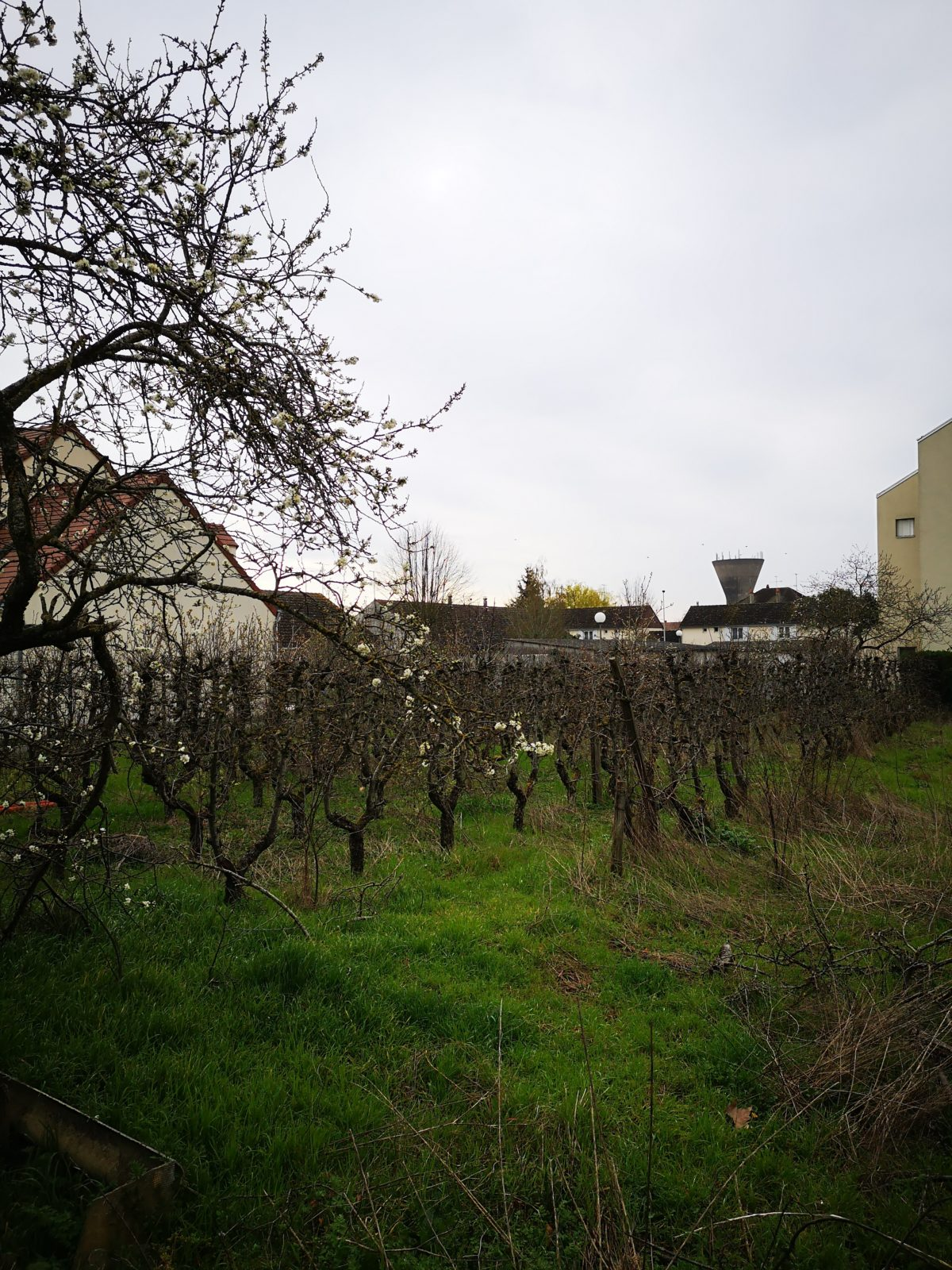Zoom sur : <br> Le Clos des Hautes Maisons <br> à Orléans